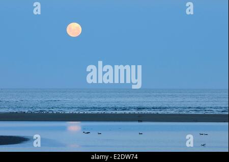 New Zealand, South island, Tasman region, moonrise in Collingwood along the Golden Bay and close to Kahurangi National - Stock Photo
