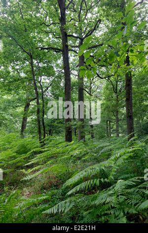 France Yvelines (78) Rambouillet forest Serqueuse crossroads of the Rotunda - Stock Photo