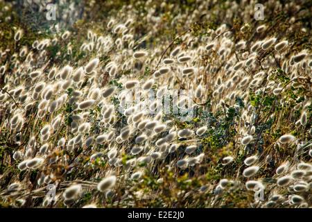 Field of grass in summer breeze - Stock Photo