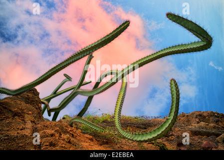 Cactus growing on hillside. Punta Mita, Mexico - Stock Photo