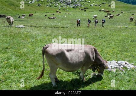 Switzerland, Ticino, Gothard range, Piora valley, trekking to Capanna Cadagno - Stock Photo