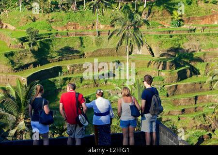 Indonesia, Bali, near Ubud, Tegalalang, tourists in rice fields - Stock Photo