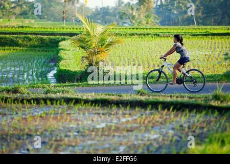 Indonesia, Bali, near Ubud, Tegalalang - Stock Photo