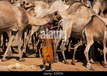 Chad, Sahel, Eref, camels at the water hole - Stock Photo