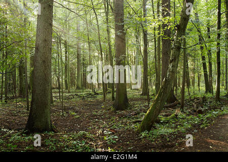 Poland Podlaskie Bialowieza National Park listed as World Heritage by UNESCO - Stock Photo