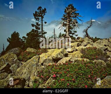 France Hautes Pyrenees Parc National des Pyrenees (Pyrenees National Park) Val d'Azun Balaitous (3144m) Masseys - Stock Photo