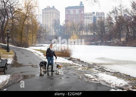 United States New York Manhattan Central Park in winter dog walker - Stock Photo