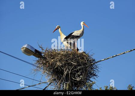 Portugal Algarve Monchique Pair of White storks (Ciconia ciconia) perching on their nest - Stock Photo