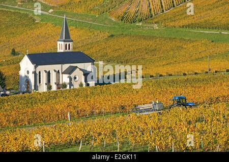 France Savoie Jongieux Church of St. Maurice vineyards AOC wines Savoie - Stock Photo