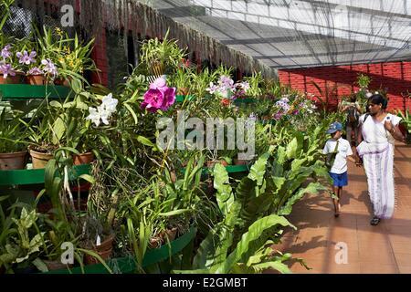 Sri Lanka Central Province Kandy Peradeniya Royal Botanical Garden Greenhouse orchids - Stock Photo