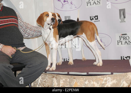 The Westminster Kennel Club 137th Annual Dog Show - Press Conference at Affinia  Featuring: Meg,Tank both Treewalking - Stock Photo