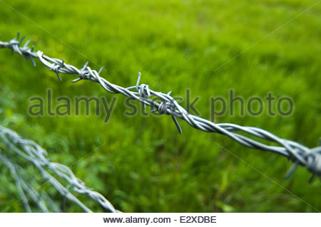 Close up of barbed wire fence in field - Stock Photo
