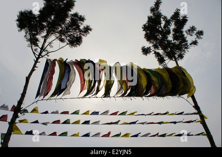 Tibetan prayer flags between two trees - Stock Photo