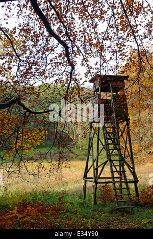 Perch in the forest Ruegen Island Jasmund National Park Germany - Stock Photo