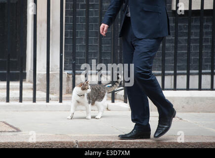 London, UK. 23rd June, 2014. Chancellor George Osborne's cat Freya goes for a stroll in Downing Street, on Monday - Stock Photo