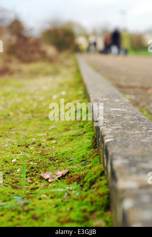 Closeup on the concrete ledge of an alley - Stock Photo
