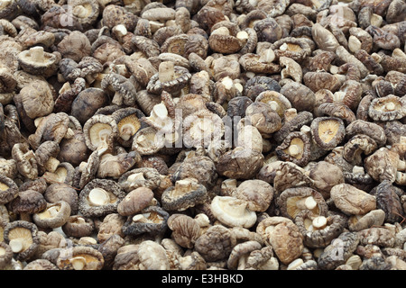 Dried Shiitake Mushrooms (Lentinula edodes) - Stock Photo