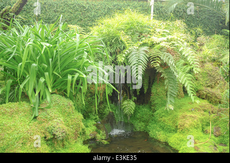 Waterfall Surrounded by Fern at Tatton Park in Spring, next to Knutsford in Cheshire, England, UK - Stock Photo