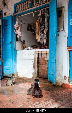 Hungry cats sit patiently outside a traditional butchers shop in the Medina in the coastal town of Essaouira, Morocco. - Stock Photo