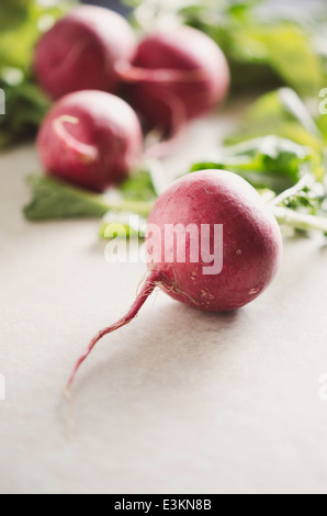 Radishes on White Background - Stock Photo