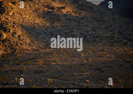 Morning sun streaks across a valley floor in California's National Park, and rakes a hillside. - Stock Photo