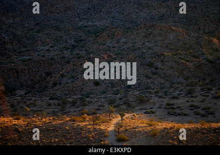Morning sun streaks across a valley floor in California's National Park. - Stock Photo