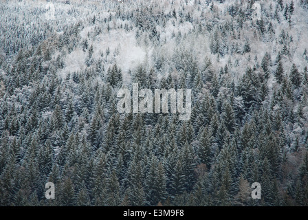 Forested mountainside in the French Alps 2 - Stock Photo