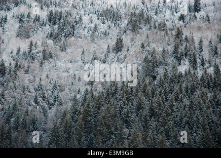 Forested mountainside in the French Alps - Stock Photo