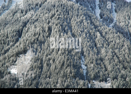 Forested mountain slope in the French Alps - Stock Photo