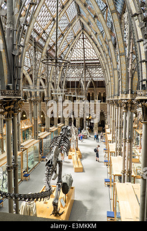 The interior of the natural history museum in Oxford, Oxfordshire, UK showing visitors, exhibits & the Victorian - Stock Photo
