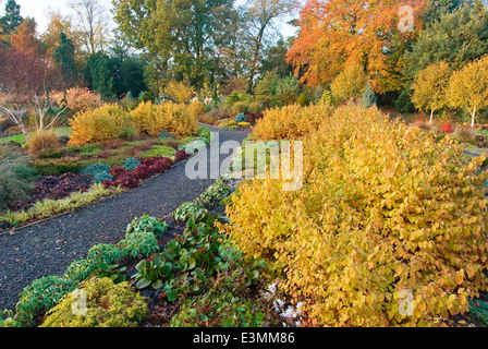 The Winter Garden in autumn Bressingham Gardens Norfolk UK