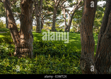 Gardens and trees overlooking the Pacific Ocean at Heisler Park, in ...