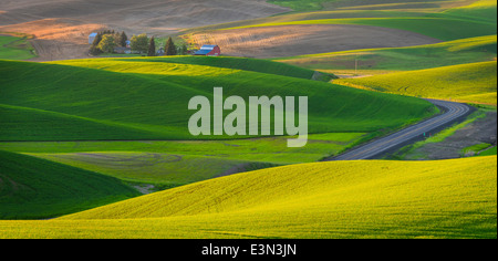The Palouse, Whitman County, WA: Elevated view of isolated farm among the abstract patterns of rolling wheat fields - Stock Photo