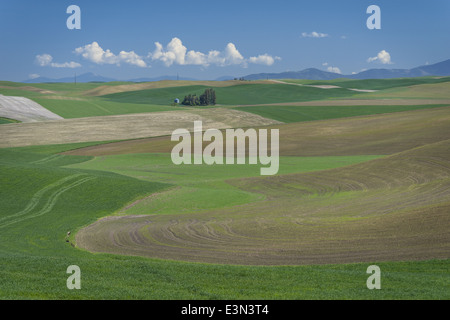 The Palouse, Whitman County, WA: Grain silo among rolling wheat fields - Stock Photo