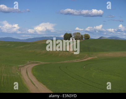 The Palouse, Whitman County, WA: Farm shed with trees on hilltop above rolling wheat fields and curving dirt road - Stock Photo