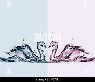 Two colored water swans in love swimming. - Stock Photo