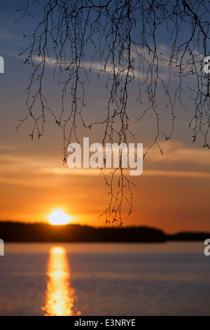 Birch branches silhouette, sunset on the Saimaa lake in Finland - Stock Photo