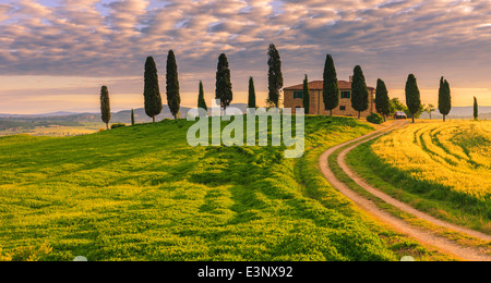 Podere I Cipressini with the famous Cypress trees in the heart of the Tuscany, near Pienza, Italy - Stock Photo