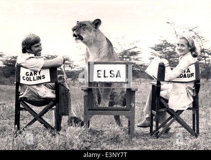 Three stars of  a TV version of 'Born Free', Elsa the lioness, Diana Muldaur as Joy Adamson and Gary Collins as - Stock Photo