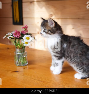 Kitten - Bavaria - Germany - June 2014 - Stock Photo