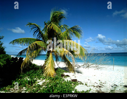 Tropical beach with coconut palm. Bird Island, Seychelles - Stock Photo