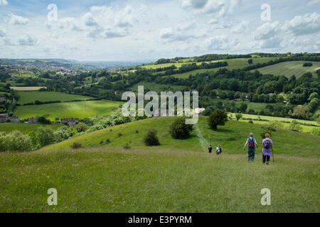 Slad Valley, Gloucestershire, UK. 21st June 2014. Over 300 walkers on the Laurie Lee Wildlife Walk descend Swifts - Stock Photo