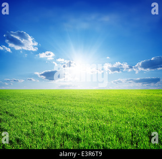 Field of green grass and perfect sky and trees - Stock Photo
