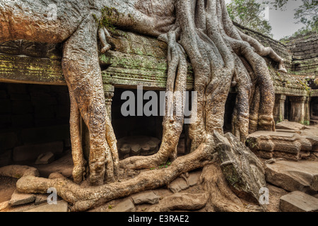 High dynamic range (hdr) image of ancient ruins with tree roots, Ta Prohm temple ruins, Angkor, Cambodia - Stock Photo