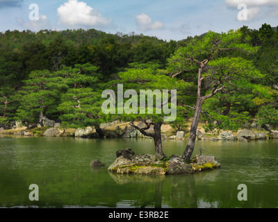 Pine trees at Japanese garden in Kyoto, Japan - Stock Photo