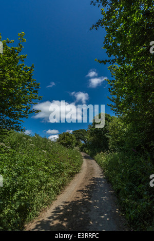 Sunny summer lane in mid-Cornwall. Lostwithiel area. - Stock Photo