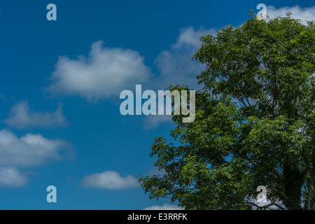 Fluffy clouds on a summer's day; tree foliage in foreground. 'Head in the clouds' metaphor, and cloud computing. - Stock Photo