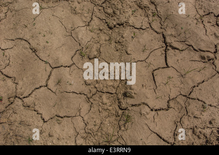 UK drought / Signs of pending water shortage as mud cracks in the heat. Metaphor for heatwave concept, heatwave - Stock Photo