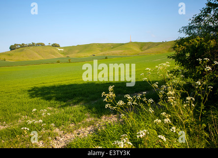 Scarp slope of White Horse on Cherhill Down and Lansdowne monument, Cherhill, Wiltshire, England - Stock Photo
