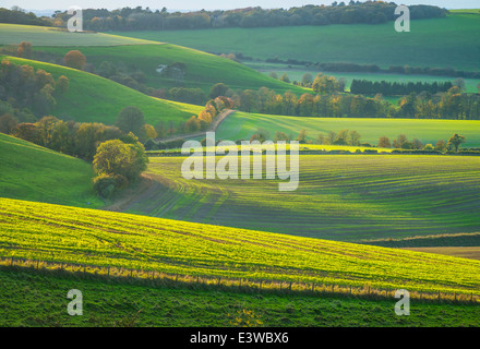 Curves field in Buster Hill, Hampshire, UK - Stock Photo